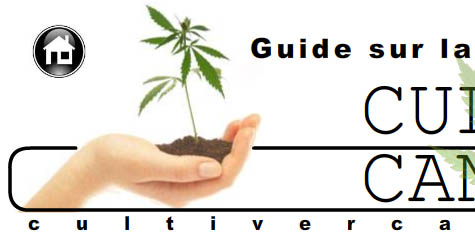 Cultiver Cannabis. Guide sur la culture du marijuana