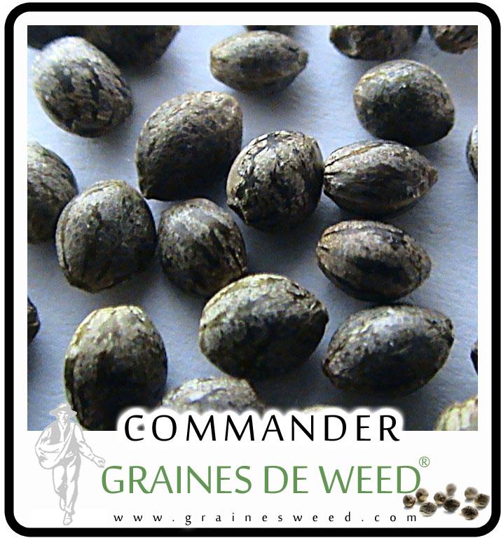 Cultiver cannabis guide sur la culture du marijuana for Graine de cannabis femelle interieur
